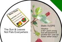 Sun and Leaves not pals everywhere- TN Assembly Elections -